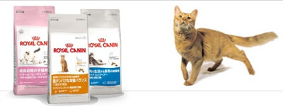 royalcanin-Korea-1