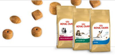 royalcanin-Korea-2